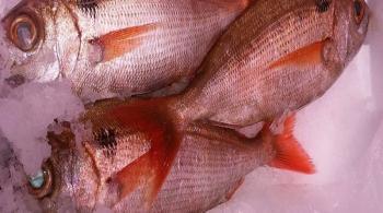 Nuestros pescados frescos