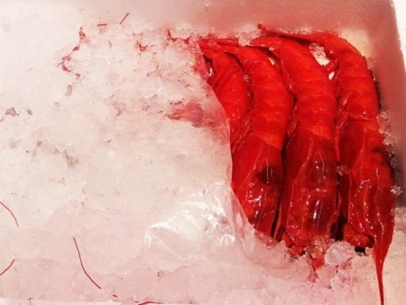 Scarlet Shrimp